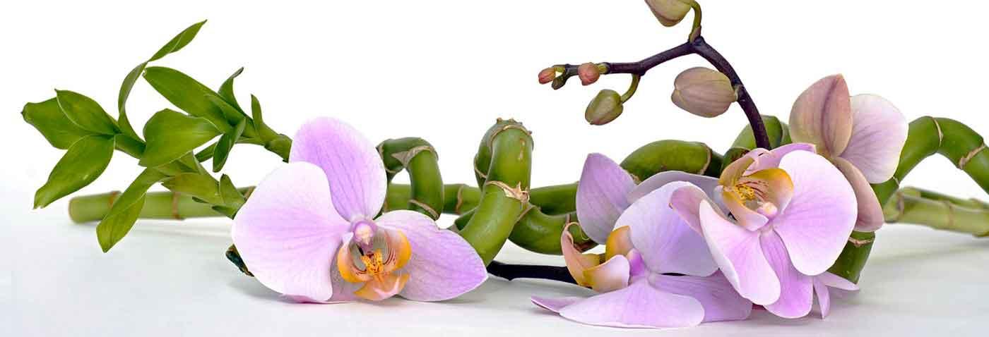 Экзотические цветы под заказ
