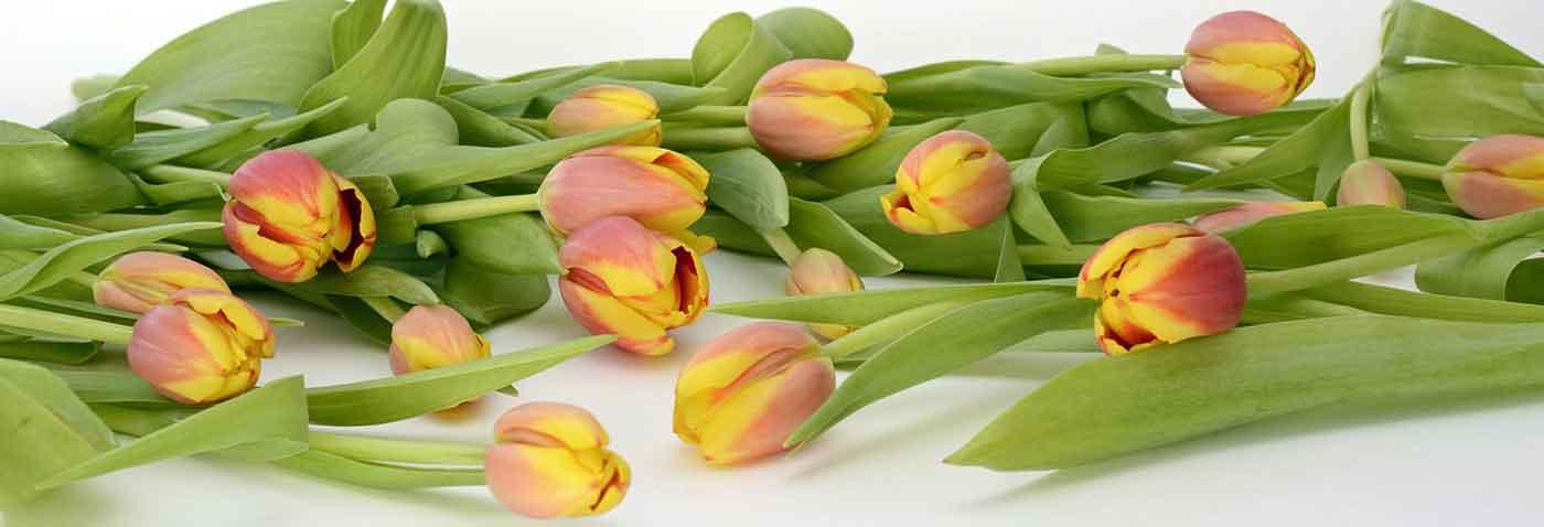 Цветы свежей срезки